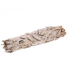 White Sage Smudge M -- 45-60g  16 cm